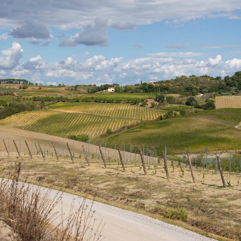 vino-nobile-montepulciano-8